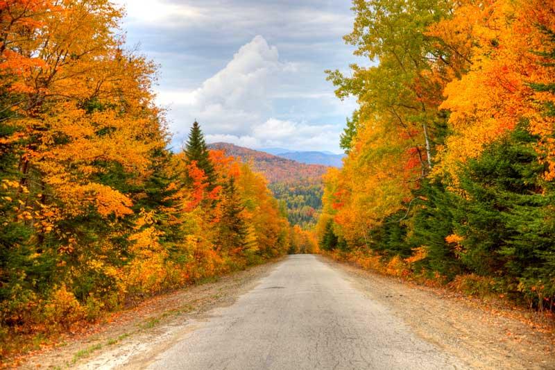 Leaf Peeping Season
