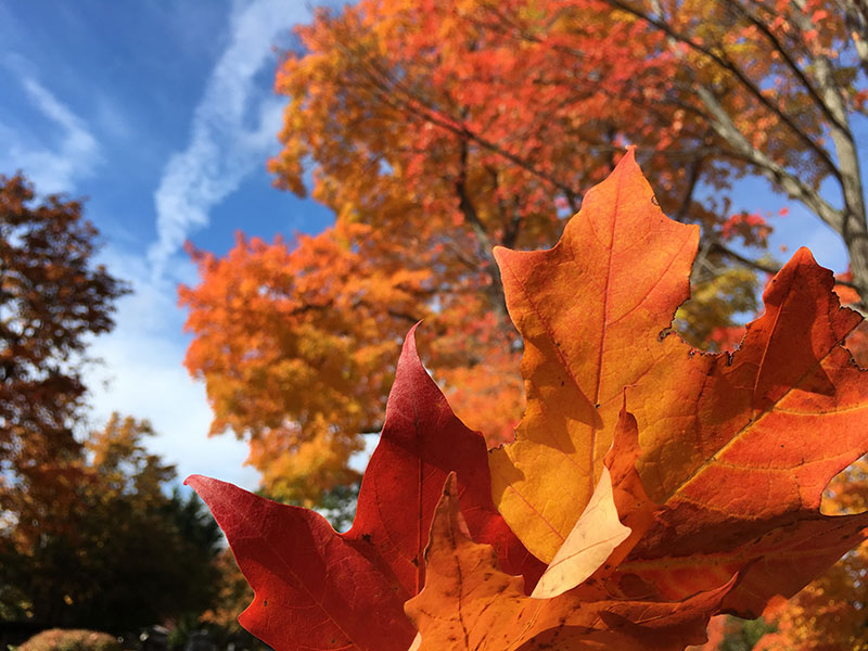 A Mainer's Fall To-Do List